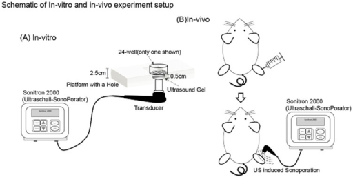 Schematic of in-vivo and in-vitro experimental setup.