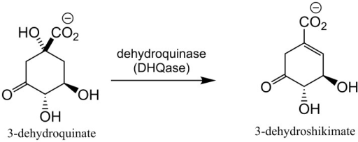 The DHQase reaction.