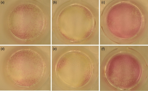 Alkaline phosphatase (ALP) expression in MC3T3-E1 cells in control and experimental groups. MC3T3-E1cells were cultured with or without treated materials for 7 days and stained with alkaline-dye mixture provided by an ALP staining kit. A representative photograph of ALP staining is shown, (a) control; (b) EMD; (c) BMP-2; (d) MTA; (e) MTA/EMD; (f) MTA/BMP-2. EMD, enamel matrix derivative; BMP, bone morphogenetic protein; MTA, mineral trioxide aggregate.