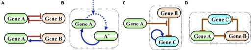 Examples of simple functional gene circuits. (A) Examples of two-gene circuits. Top is a classical toggle switch comprised of two mutually inhibiting genes described in details in the next section. Bottom is a classical flip-flop element comprised of two genes that are mutually inhibiting in one direction and activating in the other. (B) Example of a self-activating timer. Time is measured by the level of the phosphorylated protein A*, which is accumulated by external signal that phosphorylates A. In typical timers the gene A is self-activated by A*. (C) Example of an inhibition gated switch. Gene B inhibits the self-activating gene C from making transition into high expression (high level state). When the level of protein A increases it inhibits the inhibition of C by B, thus permits a stochastic transition into a state of high C. (D) Example of an oscillator (termed in systems biology as a repressilator) comprised of an inhibition loop among three genes. The origin of the oscillation is as follows: when the level of A increases, it inhibits B. As a result, the level of C increases leading to a decrease in the level of A and so on.