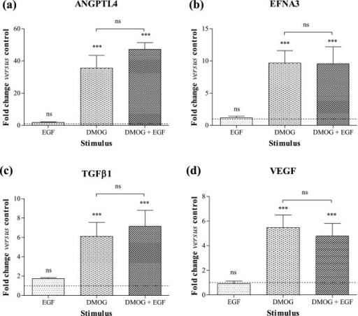 Angiogenic gene expression in Caco-2 cells exposed to EGF and/or DMOG. Caco-2 cells were stimulated with 20 ng/mL EGF and/or 1 mM DMOG for 24 hours. Changes in (a) ANGPTL4, (b) EFNA3, (c) TGFβ1 and (d) VEGF mRNA levels were determined by Q-PCR using the 2-ΔΔCt method and are expressed relative to HKG 18S. Data are mean ± SEM from 3 representative experiments, and were analysed by 1-way ANOVA of ΔCt values versus normoxia (unless otherwise indicated): ns = not significant, *** p < 0.001. Dashed line shows response of unstimulated cells.