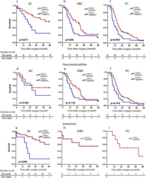 Overall survival analysis stratified by COX-2 expression. a Ampullary cancer (AC), b Distal bile duct cancer (DBC), c Pancreatic cancer (PC). d-f Overall survival analysis for AC, DBC and PC with pancreatobiliary differentiation stratified by COX-2 expression. g-i Overall survival analysis for AC, DBC and PC with intestinal differentiation stratified by COX-2 expression.