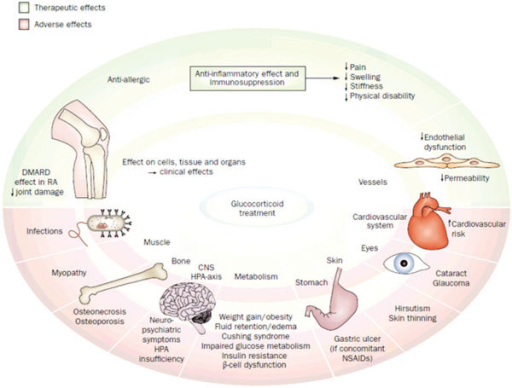 effects of glucocorticoids. glucocorticoid therapy is a | open-i, Skeleton