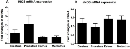 Quantitative RT-PCR analysis of iNOS (A) and eNOS (B) mRNA levels in adult mouse Fallopian tubes at different stages of the estrous cycle (n = 10/group). mRNA levels of each gene were relative to 18S rRNA levels in the same samples. Significance was tested by one-way ANOVA with Dunnett's test, and no significant differences were found between any groups. Values are expressed as mean ± SEM.