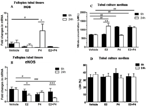 Time-dependent regulation of iNOS and eNOS expression in mouse Fallopian tubes following steroid hormone treatment. (A) The iNOS mRNA level in mouse Fallopian tubes in vitro. The expression of iNOS mRNA was significantly up-regulated from 6 to 24 h following P4 treatment but not following E2 or E2 plus P4 together (p < 0.05); (B) The eNOS mRNA level in mouse Fallopian tubes in vitro. The expression of eNOS mRNA was down-regulated from 6 to 24 h following E2 and E2 plus P4 treatment together but not after P4 treatment; (C) The nitric oxide concentration in tubal culture medium in vitro. The nitric oxide concentration was significantly lower after 6 h in tissue cultured with P4 or E2 plus P4. The nitrate concentration was lower after 24 h in culture medium containing E2 and E2 plus P4; and (D) The LDH level in the tubal culture medium as measured by the optical density on a microplate fluorometer at a wavelength of 490 nm. There was no significant difference between the four groups. Significance was tested by one-way ANOVA or two-way ANOVA. Values are expressed as mean ± SEM. * p < 0.05, ** p < 0.01, *** p < 0.001 compared with 6 h incubation of same steroid hormone treatment; #p < 0.05, ##p < 0.01, ###p < 0.001 compared with vehicle at the same incubation time.