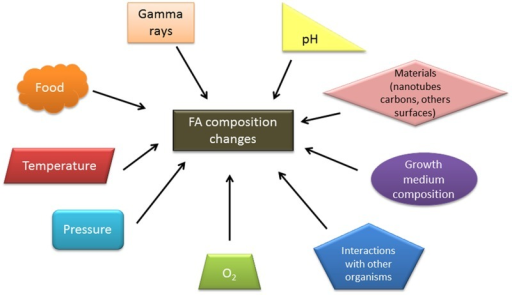 Environmental factors influencing the FA composition of Bacillus genus strains.