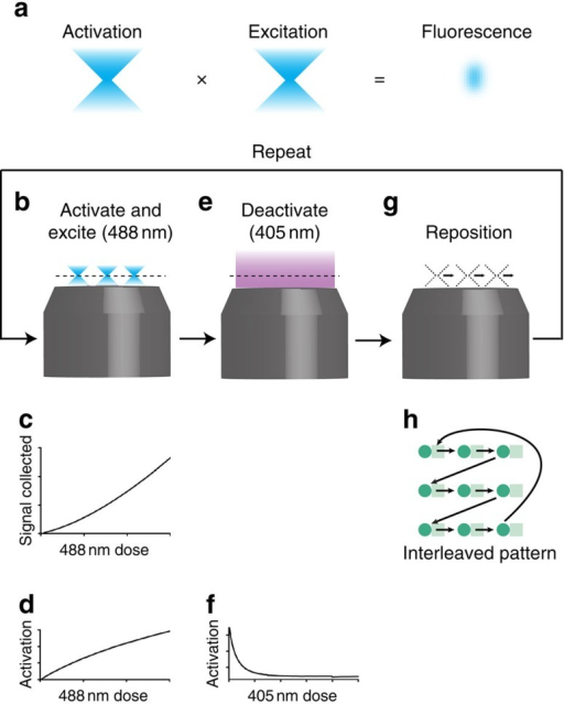Two-step fluorescence principle and two-step imaging using Padron.(a) Activation and excitation probabilities are proportional to illumination intensity for an ideal two-step fluorophore. Fluorescence is confined to a small region, the product of the activation and excitation regions. (b) We activate and excite Padron with point-focused 488 nm light, and image the fluorescence onto a camera. (c) The signal collected is approximately quadratic in the 488 nm dose, because (d) the degree of activation is approximately linear in the 488 nm dose for our typical dosage. (e) Next we deactivate Padron with an unfocused beam of 405 nm light, to mimic the spontaneous deactivation of an ideal two-step fluorophore. (f) The activated fraction decays exponentially with increasing 405 nm dose. (g) Finally we reposition the illumination pattern, and repeat the process. The scan pattern is coarse to avoid exciting previously activated Padron, and (h) we interleave multiple coarse scans to achieve a fine scan. Note that panels (c,d,f) are conceptual illustrations; for quantitative information, see Supplementary Fig. 4 and ref. 16.