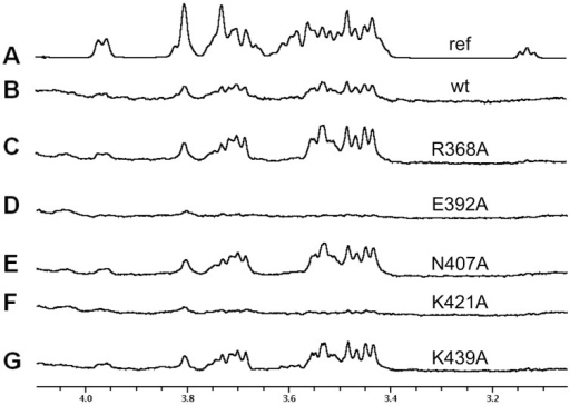 Saturation transfer difference NMR experiments performed on 3'-sialyllactose in the presence of different TAdV-3 fibre head mutants.A) Off-resonance (reference) spectrum. B) STD spectrum with wild-type virulent protein. C) STD spectrum with R368A mutant protein. D) STD spectrum with E392A mutant protein. E) STD spectrum with N407A mutant protein. F) STD spectrum with K421A mutant protein. G) STD spectrum with K439A mutant protein.