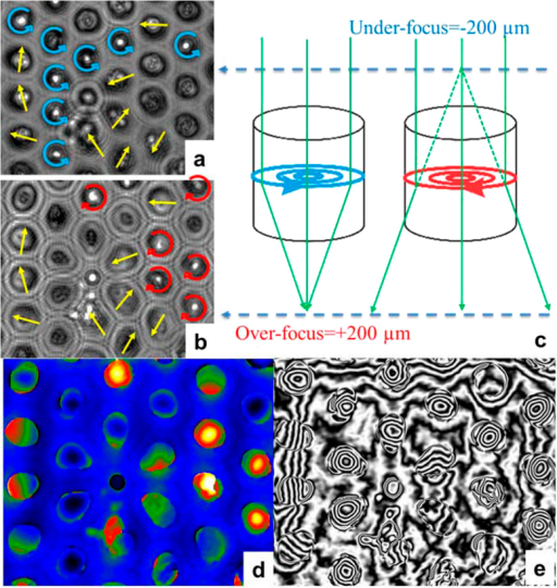 LorTEM images in over- (a) and under-focused (b) conditions of an array of NWs 45 nm in diameter and 55-nm long at remanence. The arrows show the transverse direction and the clockwise (red) and anticlockwise (blue) rotation of NW magnetization. As (c) shows schematically, the magnetic vortex acts as a convex or a concave lens, depending on its chirality, which creates a focus above or below the sample. Looking at these planes, we could detect the presence of a vortex state and determine its chirality. On the hologram image (d) the high- and low-phase values are represented by two color sequences that correspond to the clockwise and anticlockwise rotation of NW magnetization and (e) shows the contour lines corresponding to the B⊥.