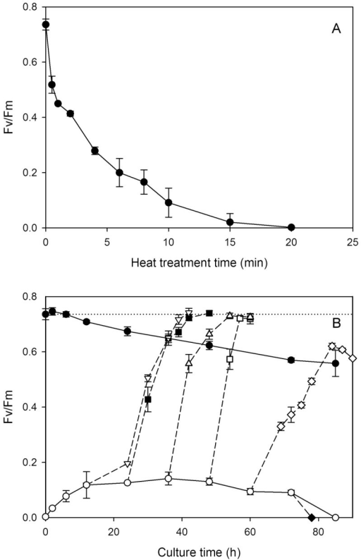 The variation of photosynthetic activity (Fv/Fm). (A) The decay of Fv/Fm ratio as a function of the time of heat treatment. (B) The variations of the Fv/Fm of heat-treated cells are plotted as functions of the time of recultivation in the dark (○), and those with light (150 μmol photon m-2 s-1) turned on at 12 (∇), 24 (■), 36 (Δ), 48 (□), 60 (◊) and 72 h (♦), respectively. The Fv/Fm of untreated cells as a function of the time of dark cultivation is also shown (●). Each data point represents the mean ±SD of three independent measurements with two replicates each. The dotted line indicates the Fv/Fm (0.74 ± 0.02) of untreated cells at the beginning of dark cultivation.