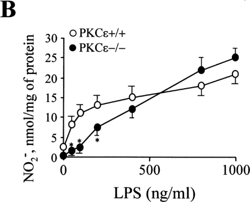 Macrophages from PKCε−/− mice generate less NO in response to LPS challenge. (A) Graphical representation of the percentage of thioglycollate-elicited peritoneal macrophages that expressed cell-surface CD11b and CD14. (B) Graph showing the release of nitrite into the culture medium after the activation of thioglycollate-elicited peritoneal macrophages with increasing concentrations of LPS for 24 h. (C) Graphical view of nitrate release into the culture medium after the activation of thioglycollate-elicited peritoneal macrophages with a fixed concentration of both LPS (200 ng/ml) and IFNγ (20 U/ml) for increasing periods of time. Results show the mean ± SEM of three experiments. The * denotes P < 0.05 for experimental vs. wild-type animals for the parameters indicated.