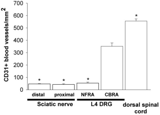 CD31+ blood vessel density is significantly higher in cell body-rich areas (CBRA) as compared to nerve fiber-rich areas (NFRA) of the L4 dorsal root ganglia (DRG) and distal and proximal sciatic nerve of the C3H mouse. Regional differences in blood vessel density were determined by quantifying the CD31+ blood vessels/mm2 in 15 μm cut sections of the L4 DRG and attached nerve roots. Each bar of the histograms represents the mean +/- SEM of at least 4 mice and * indicates a difference of p < 0.05 vs CBRA of the L4 DRG.