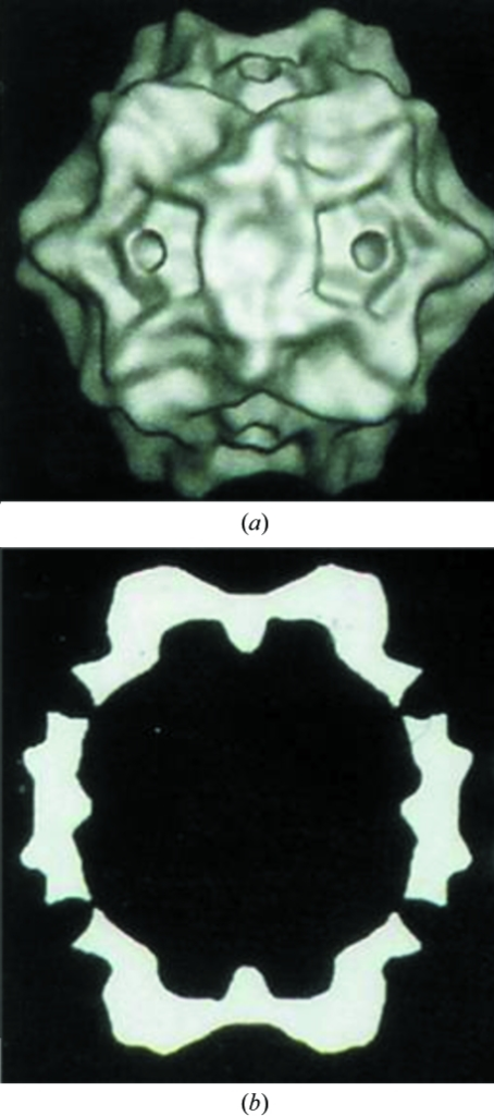 Cryo-EM reconstruction of CPV at 21 Å resolution showing (a) a surface-shaded representation (adapted from Chipman et al., 1996 ▶) and (b) a central section (adapted from Tsao et al., 1991 ▶). The virus is about 280 Å in diameter. These reconstructions were based on icosahedral symmetry averaging, as was also the determination of the CPV crystal structure.