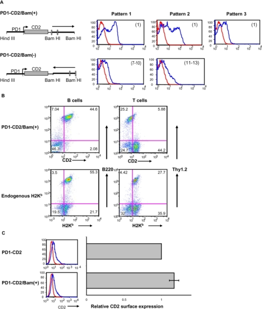 3′ intergenic sequences are required for stable in-vivo expression of the MHC I gene, PD1.(A) FACS profiles of CD2 surface expression on PBL of transgenic mice. Transgenic mice were generated with constructs containing the human CD2 reporter driven by the PD1 promoter (PD1/CD2) into which a segment 3′ to PD1 coding sequences was inserted in either the forward (PD1-CD2/Bam(+)) or reverse orientation (PD1-CD2/Bam(−)). The numbers in parentheses indicate the range of transgene copy numbers in different lines. (B) FACS profiles of huCD2 expression on B (B220) and T (Thy1.2) cells of PD1CD2/Bam(+) transgenic mice (pattern 1 from (A)). H-2Kb expression pattern in the same mice is shown as control. (C) M12 cells were transiently transfected with PD1/CD2 or PD1-CD2/Bam(+). Surface expression was determined by FACS analysis with anti-huCD2 antibody (left panels); relative surface expression (right panels) is the average level of expression and standard deviation among 3 independent transfections.