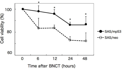 Suppression of the proliferation of oral SCC cells by BNCT. SAS/neo and SAS/mp53 cells were treated with BNCT, and cell viability was measured by the MTT assay. The cell viability of untreated cells was also measured and used as a control. *p < 0.01, SAS/neo vs. SAS/mp53.