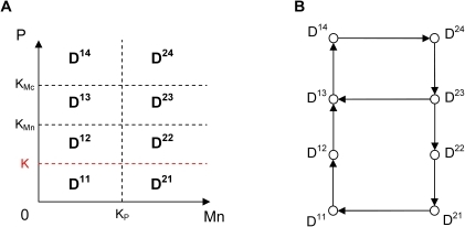 Subdivision of the phase space and transition graph for Model 3.(A) Subdivision of the phase space for Model 3 in 8 domains delimited by the thresholds KP, KMn, KMc and the additional threshold K (in red). (B) Transition graph of Model 3. The graph contains a branching point in domain D23 and two embedded cycles. From this domain, the system can either go to domain D13 or domain D22 depending on the initial conditions.