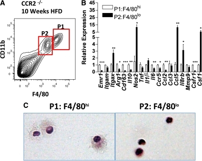 CD11bloF4/80lo cells have an inflammatory expression profile and a monocytic morphology. CD11bloF4/80lo and CD11bhiF4/80hi cells were isolated by fluorescence-activated cell sorting from CCR2−/− mice fed an HFD for 10 weeks. A: Gating strategy used for cell sorting; CD11bhiF4/80hi (P1) and CD11bloF4/80lo (P2). RNA was isolated from the sorted cells and used for gene expression analysis by real-time RT-PCR. B: Gene expression profiles in CD11bloF4/80lo (P2) cells relative to CD11bhiF4/80hi (P1) cells in CCR2−/− mice were assessed (mean ± SEM; n = 4 biological replicates). C: Representative images of H-E–stained CD11bhiF4/80hi (P1) and CD11bloF4/80lo (P2) cells. *P < 0.05 compared with CD11bhiF4/80hi. **P < 0.01 compared with CD11bhiF4/80hi. ***P < 0.001 compared with CD11bhiF4/80hi. (A high-quality color representation of this figure is available in the online issue.)