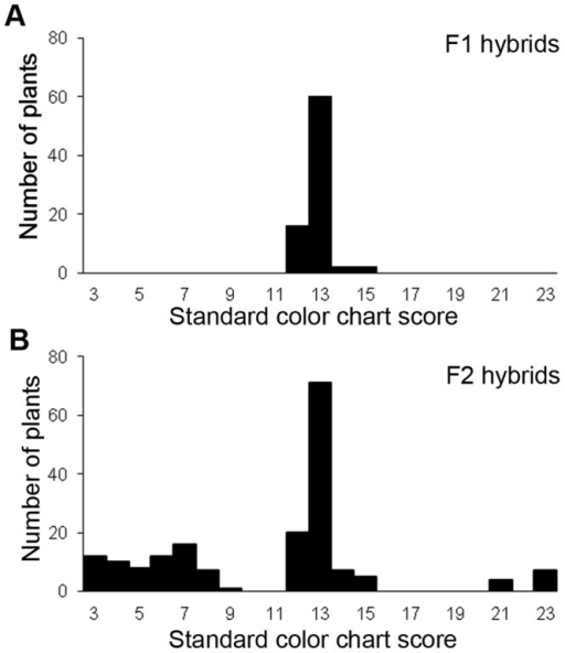 Variation of flower colors in F1 (A) and F2 hybrids (B).The horizontal axis is the standard color chart score. Larger scores indicate reddish color and smaller scores indicate yellowish color. Color chart scores from 2–13 were classified as the yellow group, and color chart scores from 14–23 were classified as the yellow-orange group. The vertical axis is the number of plants.