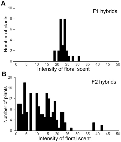 Variation of fragrance intensity in F1 (A) and F2 hybrids (B).The horizontal axis is the intensity of floral scent measured with a handheld odor meter. The odor meter can show relative intensity of scent in an arbitrary scale. All data sets were measured by the same odor meter for reproducibility. The vertical axis is the number of plants.