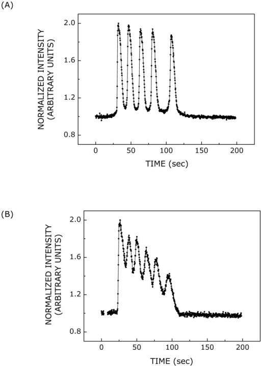 Calcium responses induced by ATP.Representative (A) distinct or (B) overlapping calcium spikes observed upon stimulation with 500 nM ATP. The propensity of the occurrence of overlapping calcium spikes increased with increase in ATP concentration. The temporal profile of calcium response was intensity-normalized such that the maximum and minimum (basal) intensities corresponded to values 2 and 1, respectively. See Materials and Methods for more details.