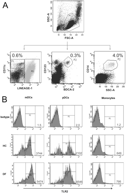 Gating strategy for identification of mDCs, pDCs and monocytes from PB samples and TLR staining.(A) Non duplets population was fractioned in mDCs as mononuclear cells Lin− and CD11c High (P3); (pDCs) as CD123+ BDCA2+ (P2) and monocytes as CD14+ (P2) . (B) Representative examples of TLR2 expression in mDCs, pDCs, and monocytes. HC indicates healthy control and DF denotes for dengue fever.