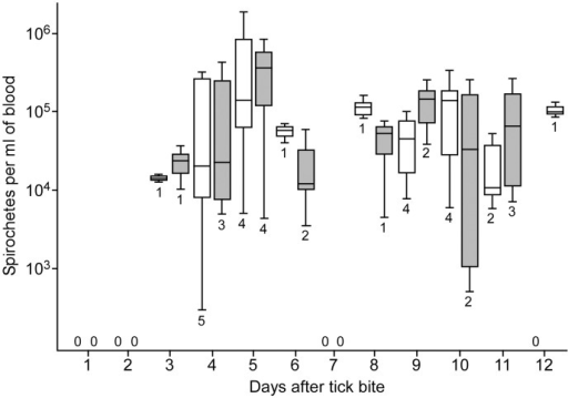 Spirochete densities within murine blood after feeding ticks infected with ΔbrpA mutants or wild type spirochetes.The white (mutant infected mice) and grey (wild type infected mice) shaded box and whisker plots represent the lower and upper quartiles, median, and lower and upper extremes of spirochete densities on a given day. The number below each plot and the zero values above the x-axis represents the number of animals infected with mutant or wild type spirochetes on the given day.