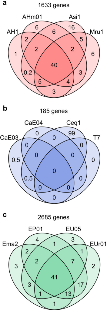 Venn diagram representing overlap of LCR genes amongFrankiastrains belonging to (a) Alnus, (b) Casuarina, and (c) Elaeagnus HSGs. The total number of nonredundant LCR genes is shown above the diagram. Numbers in the diagram are percentages of the nonredundant LCR genes associated with the indicated overlapping strains.