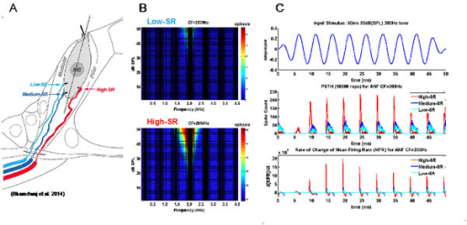 Innervation sites (A), tuning curves (B) and temporal response properties for Low- and High- SR ANFs