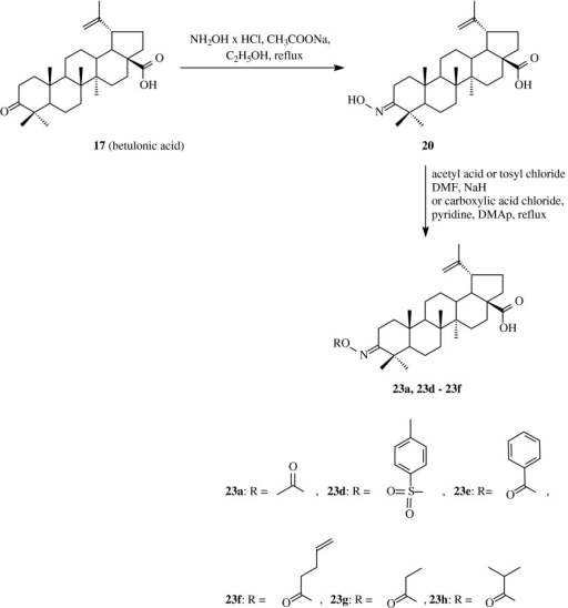 The synthesis of acylated oximes 23a and 23d–23 h derived from betulonic acid (17)