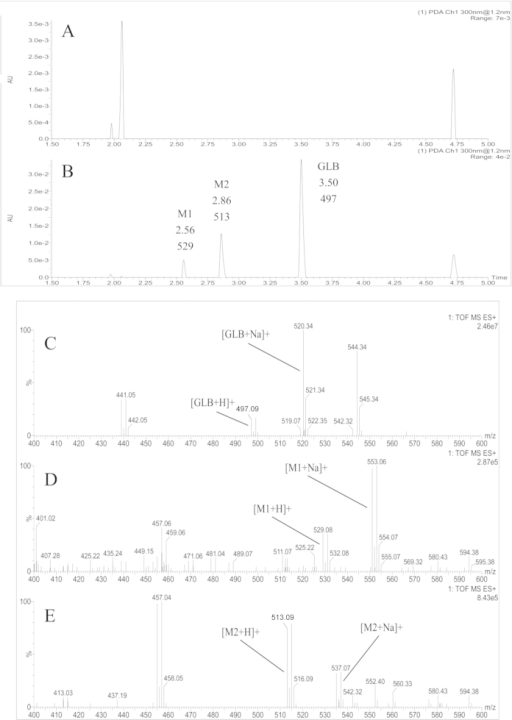 Representative UPLC chromatograms and tandem ESI-QTOF-MS mass spectrograms of(A): blank rat plasma; (B): GLB (3.50 min and m/z 497.09), metabolite M1 (2.56 min and m/z 529.08) and M2 (2.86 min and m/z 513.09) in a rat plasma sample at 6 h after oral administration GLB (100 mg/kg); (C): mass spectrograms of the parent compound GLB; (D): metabolites M1 and (E): metabolites M2 in positive scan mode using electrospray ionization (ESI) and in-source collisionally induced dissociation detected by UPLC-QTOF-MS/MS in a rat plasma sample at 6 h after a single oral administration of GLB (100 mg/kg).