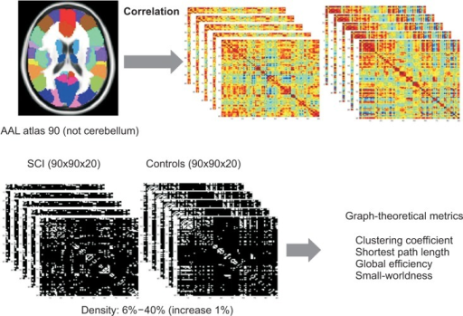 Consecutive steps of functional connectivity analysis using resting state-functional magnetic resonance imaging (rs-fMRI) with graph theoretical approach. The whole brain was parcellated into 90 regions according to automated anatomical labeling (AAL) atlas. The correlations between rs-fMRI time-series were computed. The weighted correlation matrix per subject was constructed for the controls and the spinal cord injuries (SCIs). The weighted correlation matrix was converted into binarized matrix by density thresholding from 0.06 to 0.4 (increase 1%). Random networks were also generated. Graph-theoretical metrics such as clustering coefficient, characteristic path length, global efficiency, small-worldness were measured.