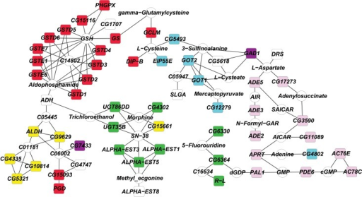 Genetic network of RJ differentially expressed genes.Colored boxes denote differentially expressed genes. Red, glutathione metabolism; pink, purine metabolism; green, drug metabolism and other enzymes; teal, cysteine and methionine metabolism; yellow, lysine degradation; purple, beta-alanine metabolism.