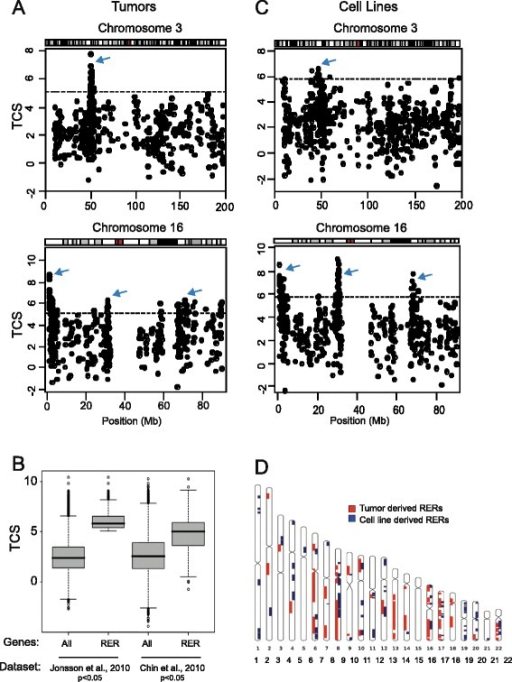 Identifying RER in breast tumors and cancer cell lines. a, c Transcription correlation score (TCS) maps for chromosomes 3 and 16 using data from breast tumors [22] (a) and breast cancer cell lines [20] (c). The horizontal dotted line indicates the significance threshold. Arrows indicate regions containing genes with significant TCSs. b Boxplots showing the distribution of TCSs generated for all genes and for RER genes using two independent breast tumor datasets [22, 23]. d Ideograms showing the location of the 45 RER regions identified in breast tumors (red) and the 71 RER regions identified in breast cancer cell lines (blue)