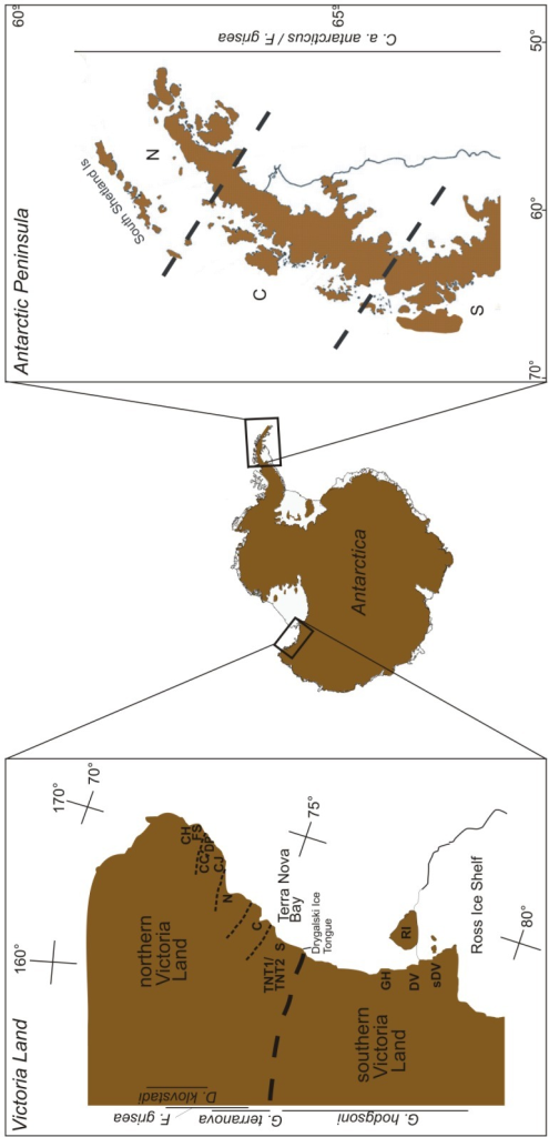 Figure showing the phylogeographic sampling that has been achieved for four Antarctic springtail species across their distributional ranges (as indicated by vertical lines beneath/above species names). The codes used in the two inset boxes are location codes and refer to potential refugial locations for each species as referred to in the respective publications and Table 1. Dashed line in the inset boxes indicate heavy or fine biogeographic breaks among regions and in many cases also represent major glacial systems. See text for further details.