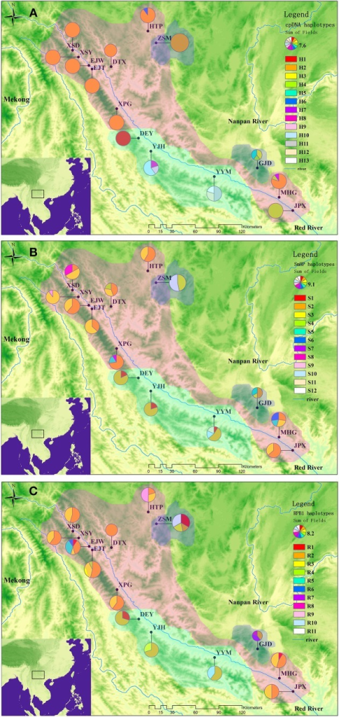 Geographical distributions of cpDNA haplotypes (A), nDNA SmHP haplotypes (B), nDNA RPB1 haplotypes (C) in C. diannanensis. Frequencies of haplotypes in each population are indicated by the proportions of pie diagrams. The colored dash areas present the sampling and possible distributions of the Cycas species in this study: Red, C. diannanensis; Green, C. parvula; Blue, C. multiovula.
