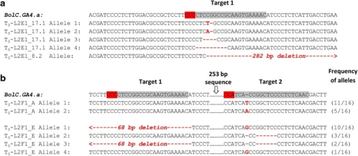 Mutant alleles detected in T0B. oleracea. Alignment of wild-type and mutant sequences surrounding the target sequences (grey highlight) and PAM (red highlight) in mutants identified by restriction digest/PCR screen (a) and by phenotypic screen (b). Insertions and deletions are indicated by red font or red hyphens, respectively. For large deletions, red arrows indicate the direction of the deletions. For each line in panel b (L2F1_A and L2F1_E), 16 clones were examined and the frequencies of each mutant allele (represented as clones with mutant allele/total number of clones examined) are indicated at the right side of the panel