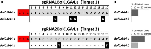 Frequency of on- and off-target Cas9 activity in L2F1_8.2 T1Brassica plants. a The alignment of sgRNA1BolC.GA4.a and sgRNA2BolC.GA4.a target sequences in BolC.GA4.a with their corresponding sequences in BolC.GA4.b. Hyphens represent alignment matches while mismatches are shown in black highlight and white font. The PAM is highlighted in red and numbering of nucleotides is relative to the PAM. b Percentage of the T1 plants with mutations in BolC.GA4.a and BolC.GA4.b. Dark and light grey bars represent the percentages of BolC.GA4.a and BolC.GA4.b editing, respectively. N = 90 plants