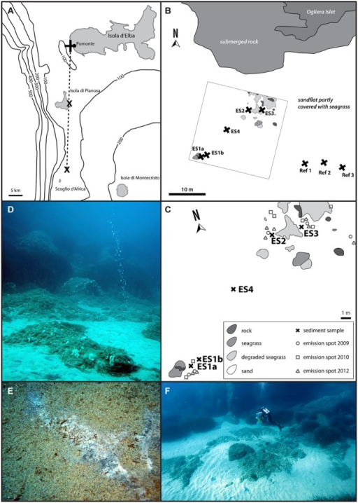 Map of the Tuscan Island seep area (A) with the three major sites, close to the islands of Elba and Pianosa, and the islet Scoglio d'Africa. This study focused on the Pomonte seep site (B) and nearby reference sites (Ref1–3). (C) Shows the detailed location of the investigated methane emission spots (ES1a, 1b, 2–4) at the Pomonte seep site. The emission spots are characterized by gas flares (D) as well as black sulfidic sediments that are occasionally covered by white mats of sulfur-oxidizing bacteria (E). The emission spots are situated in 12 m water depth, surrounded by seagrass and rocks and are easily accessible by scuba diving (F).