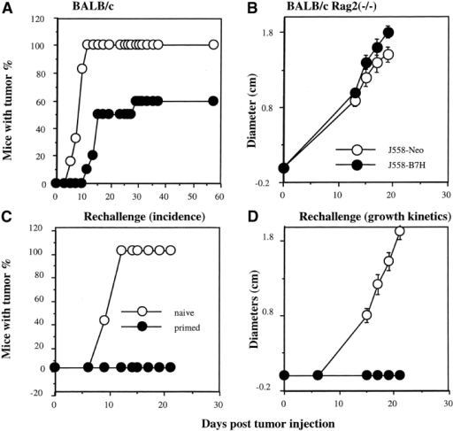 B7H expression reduced tumorigenicity of the J558 cells in immune competent mice and induced protection to subsequent challenge with the parental tumors. (A) Tumor incidence of J558-Neo (n = 6) and J558-B7H (n = 10) in immune competent mice. Data are representative of four independent experiments. In total, 24/26 mice receiving J558-Neo cells developed tumors, while 23/39 mice receiving the J558-B7H cells developed tumors. (B) J558-B7H and J558-Neo tumors grew at a similar rate in syngeneic RAG-2−/− mice (n = 7). Data shown are representative of four independent experiments, which in total involved 23 mice per group. All mice developed tumors within 2 wk. Syngeneic BALB/c or BALB/crag2−/− mice received 5 × 106 tumor cells in the flank, and the tumor incidences were determined by physical examination. (C and D) Mice that rejected J558-B7H tumors were immune to subsequent challenge with parental J558 cells. Syngeneic BALB/c mice that had rejected J558-B7H tumors and naive control mice were challenged with 5 × 106 J558 cells at the opposite flank. The tumor incidence (C) and growth kinetics (D) were measured by physical examination. This experiment was repeated twice with similar results.