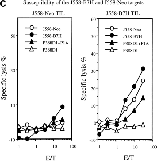 B7H increases P1A-specific CTL in the TIL from wild-type BALB/c mice. The TIL were enriched by depletion tumor cells as described (reference 12). The cytotoxicity of the freshly isolated TIL were determined using either P1A-pulsed or unpulsed P388D1, or the J558-Neo and J558-B7H cells as targets. (A) Substantial increase of activated CD8 T cells among the TIL. The TIL were stained with PE-conjugated anti-CD8 and Cy-conjugated anti-CD44 mAbs and analyzed by flow cytometry. (B) P1A-specific CTL in the TIL from the J558-B7H, but not the J558-Neo tumors. Freshly isolated TIL were used as effectors while the P1A-pulsed and unpulsed P388D1 were used as targets. (C) TIL from J558-B7H (right panel), but not those from J558-Neo (left panel), lysed both J558-B7H and J558-Neo tumors. As in B, except that the J558-Neo and J558-B7H were also used as targets. Data shown are representative of at least three independent experiments. TIL used in A and B were isolated at day 24 of tumor injection, while those used in C were isolated on day 20 of tumor cell injection.