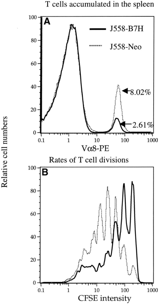 B7–1 and/or B7–2 on host cells were required for optimal T cell division in vivo. (A) The amount of Vα8+ T cells recovered from the spleen, the percentages of the P1CTL recovered were given in the panel. (B) Distributions of CFSE intensities among the Vα8+ T cells. Naive P1CTL were labeled with CFSE and adoptively transferred into the RAG-2−/− J558-B7H tumor-bearing mice that had received either control (a mixture of rat and hamster) IgG or anti–B7–1 and B7–2 mAbs on days 0, 1, and 2 of T cell adoptive transfer. Spleen cells were harvested and analyzed on day 3 of the adoptive transfer. This experiment was repeated twice with similar results.