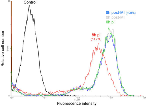 SLA I cell surface decrease on PrV infected PK15 cells. Histogram overlays of MHC class I expression detected by the mAb PT85A are shown. The number in red represents the percent mean fluorescence intensity [(mean channel fluorescence of the infected sample at 8 h pi/mean channel fluorescence of the mock-infected cells at 8 h pi) × 100]. The results represent one of three representative experiments.