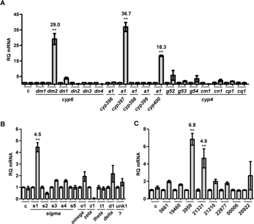 Relative expression of metabolic genes in Harlan and Richmond strain bed bugs.Real-time quantitative PCR was performed to measure the relative expression levels of (A) P450, (B) GST, and (C) CE transcripts in the pyrethroid-resistant Richmond strain as compared with the susceptible Harlan strain. Each bar represents the mean of two biological replicates, each performed in triplicate. Error bars indicate the standard deviation from the mean. All samples were normalized to the expression of alpha-tubulin. A second control gene [myosin heavy-chain, indicated by (c)] was included to verify plate-to-plate consistency. Harlan (white) and Richmond (shaded) are indicated for each gene, with Harlan set to 1 for all samples. Fold change is indicated above each bar where 2-fold or greater for all statistically significant samples (** = p<0.01).
