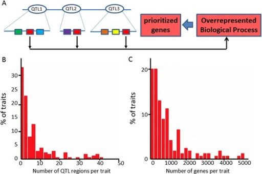 Prioritizing QTL candidate genes via associating traits to biological processes. (A) Principle of method used: Biological processes (indicated as different colored boxes) are annotated for genes in QTL regions for a trait-of-interest. Using these gene functions, trait-biological process associations are obtained based on enrichment of biological processes among the genes linked to a particular trait, integrating information from multiple QTL regions. Genes annotated with overrepresented biological processes are prioritized. (B) Number of QTL regions connected to traits in the rice QTL compendium used for this analysis. The scale of the horizontal axis in the histogram is clipped at 50, so traits with more than 50 QTL regions associated (~2% of the total) are not included. (C) Number of genes connected to traits in the rice QTL compendium. The scale of the horizontal axis in the histogram is clipped at 5000, so traits with more than 5000 genes associated (~5% of the total) are not included.