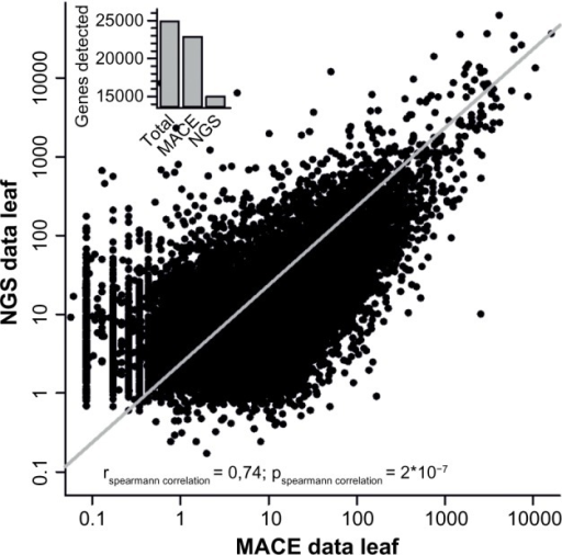 NGS and MACE comparison. Comparison of MACE and NGS data for leaf tissue. The line indicates the Spearman correlation for both leaf expression datasets using RNA-seq and MACE. The inset gives the number of genes assigned in the genome, detected by MACE and detected by NGS, and depicts the higher coverage achieved by MACE.