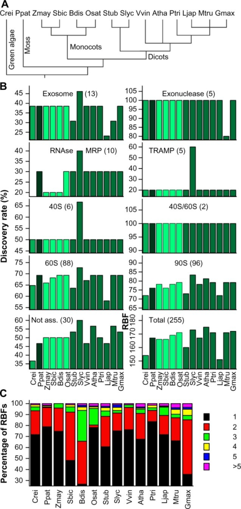 Prediction of RBF coding genes. (A) Phylogenetic relation of the 14 plant species used for the analysis. (B) Discovery rate of RBFs based on 255 yeast RBFs11 in the genomes of 14 plant species in percentage of the number found in yeast given for the different families. The different colors indicate the phylogenetic relation (green: green algae; black: moss; light green: monocots; dark green: eudicots). (C) The percentage of plant RBFs encoded by the indicated number of co-orthologs. Atha: A. thaliana; Bdis: B. distachyon; Crei: C. reinhardtii; Gmax: G. max; Ljap: L. japonicus; Mtru: M. truncatula; Osat: O. sativa; Ppat: P. patens; Ptri: P. trichocarpa; Sbic: S. bicolor; Slyc: S. lycopersicum; Stub: S. tuberosum; Vvin: V. vinifera; Zmay: Z. mays.