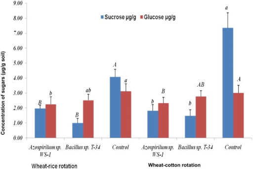 Detection of sugars (μg.g-1 dry soil) in rhizosheaths of wheat.Plants were inoculated with Azospirillum sp. WS-1, Bacillus sp. T-34 or non-inoculated (control). Sugars were collected by washing the roots containing soil as rhizosheath in 30 mL sterilized distilled water for 5–10 minutes. The values given are an average of 3 replicates. Letters Aa, Bb and Cc represents the significance level by comparison of means.