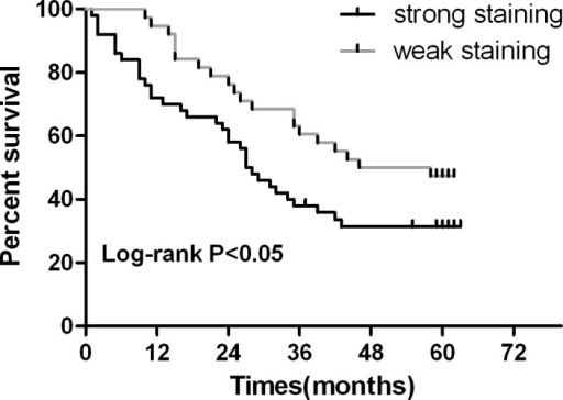Kaplan-Meier survival curves in gastric carcinoma according to ERp19 stainingPatients with ERp19 strong staining had a significantly poorer prognosis than those with weak staining. P < 0.05.