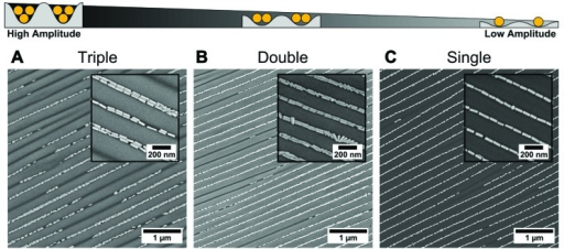 Amplitude dependency of linear assembly of BSA-functionalised gold nanorods into wrinkles using dip-coating. Organisation of gold nanorods into (A) triple lines, (B) double lines, and (C) single lines. From (A) to (C) the amplitude of the wrinkles decreases progressively. For all samples the withdrawal of the templates was performed with the wrinkles oriented perpendicular to the contact line with a withdrawing speed of 100, 10, and 10 μm min–1, respectively, and a gold concentration of 1 mg mL–1.