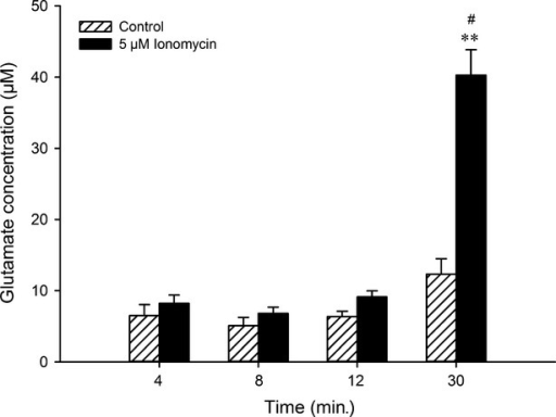Time-dependent modulation of glutamate release by ionomycin. Glutamate concentration (μM) in culture medium after 4, 8, 12 and 30 min. of 5 μM ionomycin incubation. **P < 0.01 indicates the significant difference of glutamate release when ionomycin is compared with control at 30 min.; #P < 0.05 indicates that glutamate release at 30 min is different compared with other stimulation time-points. Results are shown as mean ± SEM.